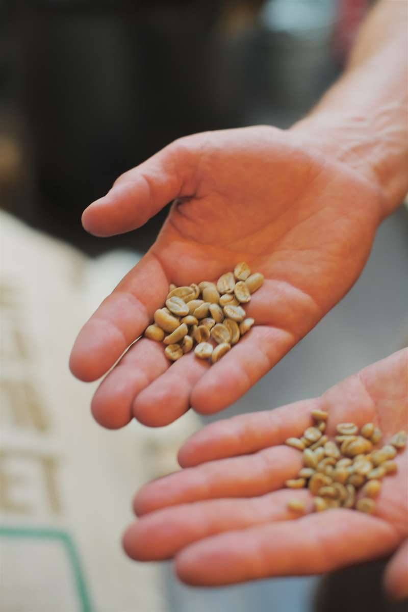 Jedem entkoffeinierten Kaffee liegt die grüne Kaffeebohen mit Koffein zugrunde