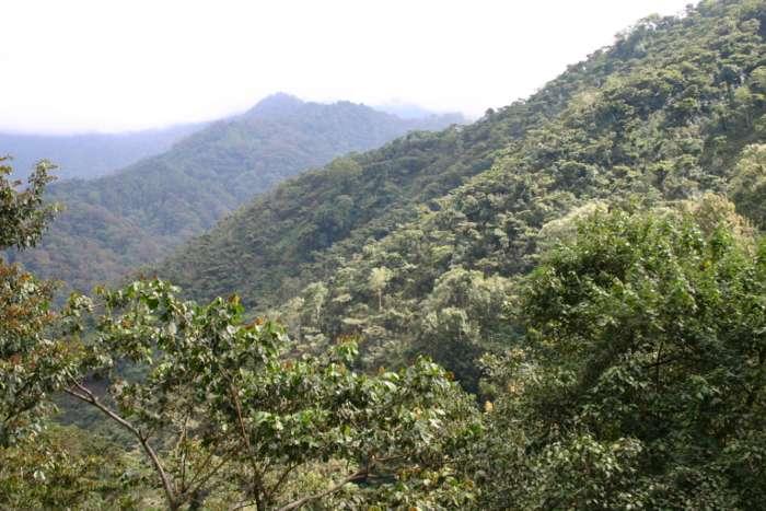 Weitsicht auf eine Kaffeeplantagae in Mexico